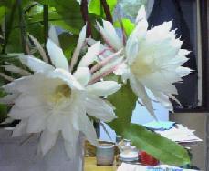 2004_1112.jpg